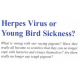 Herpes or YB Sickness