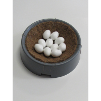 Polmark  PL. Solid plastic  pigeon  eggs
